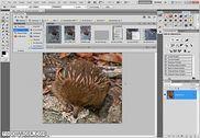 Adobe Photoshop CS6 Extended Multimédia