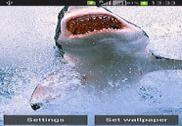 Magic Touch Shark Attack LWP Internet