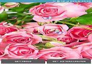 Rose Live Wallpapers Internet