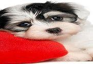 Fond D'écran Animé Amour ???? Belles Images Internet