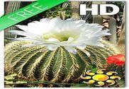 Cactus Flowers LWP Internet