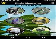 Birds Sounds Maison et Loisirs