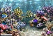 Aquarium 3D Personnalisation de l'ordinateur