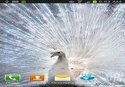 White Peacock Live Wallpaper Personnalisation de l'ordinateur