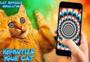 Chat hypnotiseur - illusions Jeux