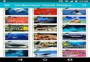 Underwater World Wallpapers! Multimédia