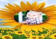 Sunflower Frames Photo Editor Multimédia