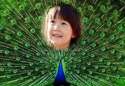 Peacock Feather Photo Frames Multimédia