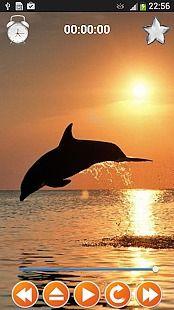 Dolphin Sounds Sleep & Relax