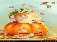 Citrouille Kitten Wallpaper gr