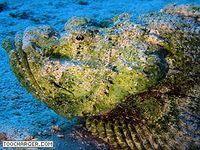 Ecran de Veille : Croisiere Mer Rouge
