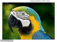 photo-555.com Album 11 Screensaver