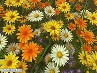 Wildflowers 3D Screensaver