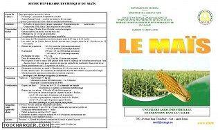 Gestion d'une exploitation agricole : production de maïs