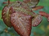 Pluie d'automne Fonds d'écran