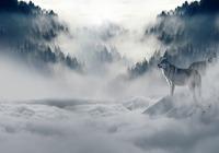 Loup dans la brume Photos
