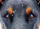 Regard de chien et flocons de neige Photos