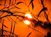 Soleil couchant derrière les branches Photos