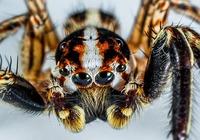 Araignée drôle