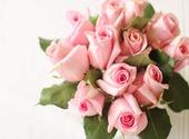 Des Roses pour la Saint-Valentin Photos