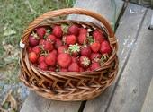 Panier de fraises Photos