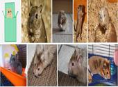 Image composite de X Hamsters Photos