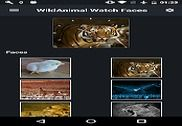 Animal Watch Faces Internet
