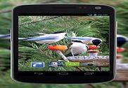 4K Garden Birds Video Live Wallpaper Internet