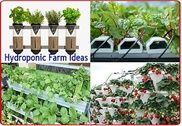 Hydroponiques Idées agricoles Maison et Loisirs