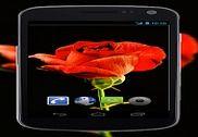 4K Red Rose Video Live Wallpaper Internet