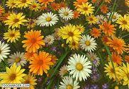 Wildflowers 3D Screensaver Personnalisation de l'ordinateur