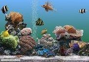 Marine Aquarium Personnalisation de l'ordinateur