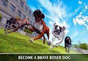 Boxer City Dog Simulator 3D Jeux