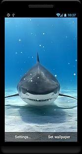 Requin Fond D Ecran Anime Pour Android Telecharger Gratuitement