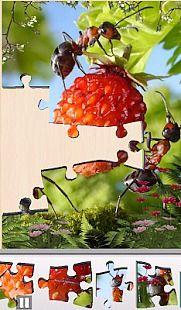 Live Jigsaws - Ant Farm