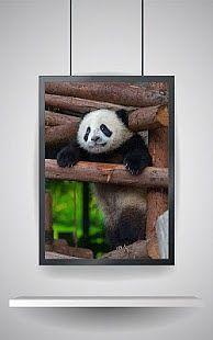 Animals Puzzle: Panda