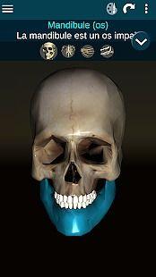 Système osseux 3D (anatomie)