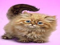 Pelucheux chat fond d'écran