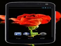 4K Red Rose Video Live Wallpaper