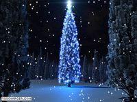Holiday Tree Screensaver