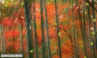 3d Animated Forest 2