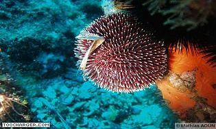 Ecran de Veille : Plongée Sous-Marine et Fleurs