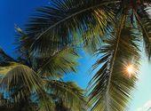 Palmiers Fonds d'écran