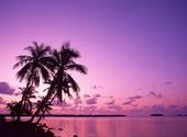 Réveil tropical Fonds d'écran