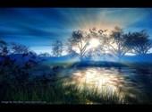 Ciel ensoleillé traversant la foret Fonds d'écran
