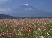 Mont Fuji Fonds d'écran