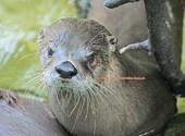 Basel Zoo Loutre (44606) Photos