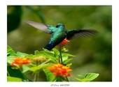 Colibri Photos
