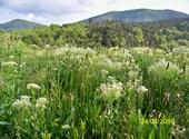 Fleurs de montagne ( 7 ) Photos