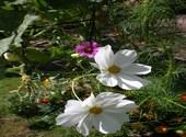 Blancrose Photos
